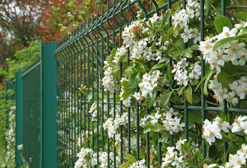 Panele ogrodzeniowe dla domu